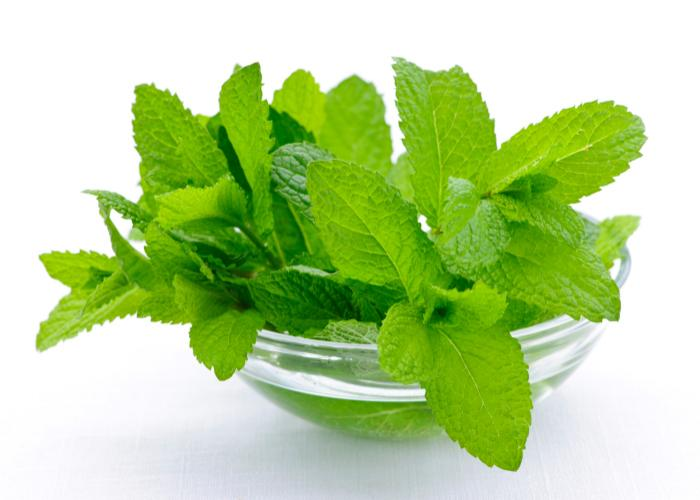 Everything about Mint Leaves